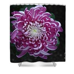 Fancy Chrysanthemum In Pink Shower Curtain