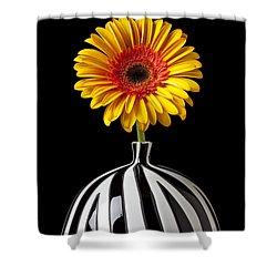 Fancy Daisy In Stripped Vase  Shower Curtain by Garry Gay