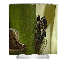 Fancy Meeting You Here Shower Curtain