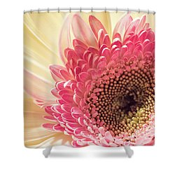 Fancy Pants Gerbera Daisy Shower Curtain