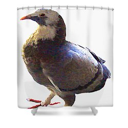 Shower Curtain featuring the photograph Fancy Pigeon Macro-portrait by Merton Allen