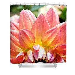 Fanned Out Petals Shower Curtain