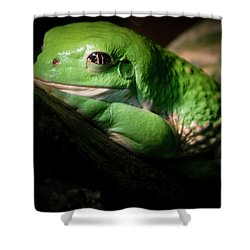 Fantastic Green Frog Shower Curtain by Jean Noren