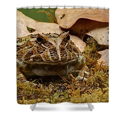 Shower Curtain featuring the photograph Fantasy - Horned Frog by Nikolyn McDonald