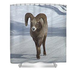 Farewell To The King Shower Curtain by Tiffany Vest