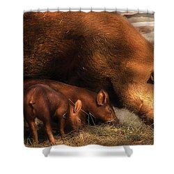 Farm - Pig - Family Bonds Shower Curtain by Mike Savad