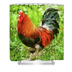 Farm - Chicken - The Rooster Shower Curtain by Mike Savad