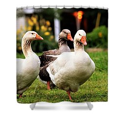 Farm Geese Shower Curtain