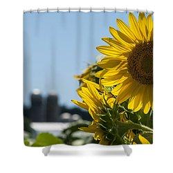 Farm Sunshine Shower Curtain