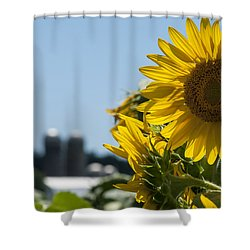 Farm Sunshine Shower Curtain