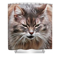 Fat Cats Of Ballard 4 Shower Curtain