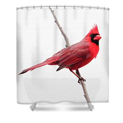 Father's Day Cardinal Shower Curtain
