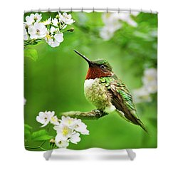 Fauna And Flora - Hummingbird With Flowers Shower Curtain