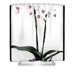 Favorite Gift Of Orchids Shower Curtain by Marsha Heiken