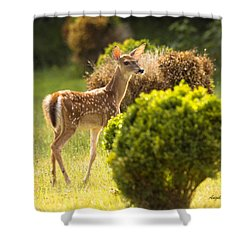 Shower Curtain featuring the photograph Fawn by Angel Cher
