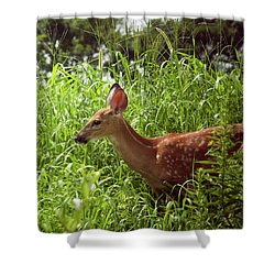 Fawn In The Meadow Shower Curtain