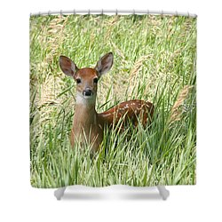 Fawn In The Tall Grass Shower Curtain