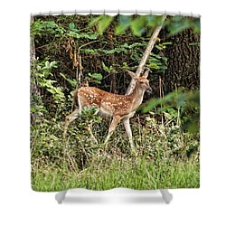 Fawn In The Woods Shower Curtain by Rick Friedle