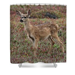 Shower Curtain featuring the photograph Fawn Looking Out To Sea  by Christy Pooschke