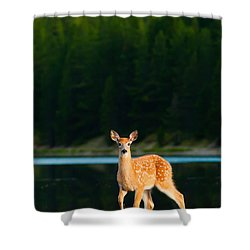 Fawn Shower Curtain by Sebastian Musial