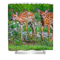 Fawn Twins Shower Curtain