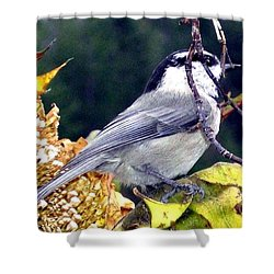 Feast For A Chickadee Shower Curtain by Will Borden
