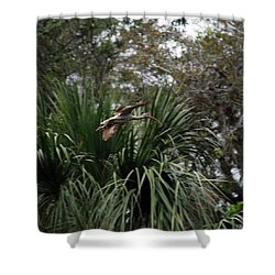 Feather 8-10 Shower Curtain by Skip Willits