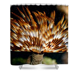 Feather Duster Shower Curtain by Anthony Jones