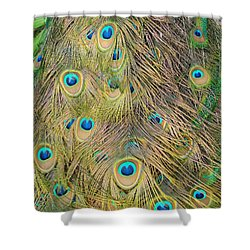 Shower Curtain featuring the photograph Feather Finesse by Margaret Bobb