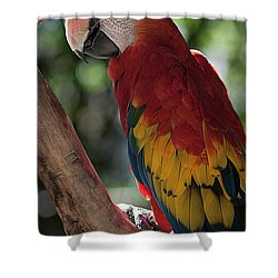 Feathered Rainbow Shower Curtain