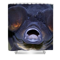 Feed Me Shower Curtain by Linda Sannuti