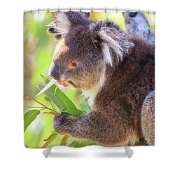 Feed Me, Yanchep National Park Shower Curtain