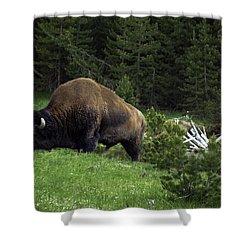 Shower Curtain featuring the photograph Feeding Buffalo by Jason Moynihan