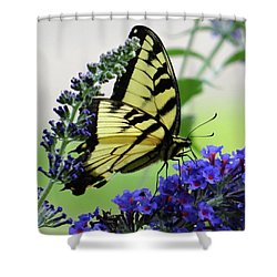 Feeding From A Nectar Plant Shower Curtain