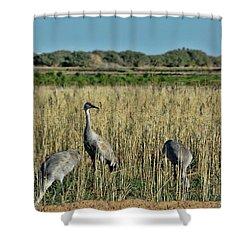 Feeding Greater Sandhill Cranes Shower Curtain