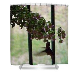 Feeding Hummingbird Shower Curtain
