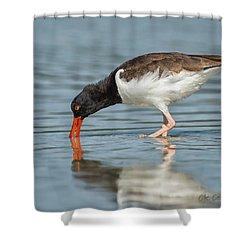 Feeding Oystercatcher Shower Curtain