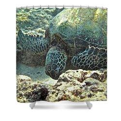 Feeding Sea Turtle Shower Curtain by Michael Peychich