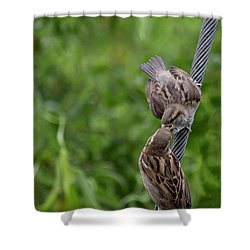 Shower Curtain featuring the photograph Feeding Time by Brian Roscorla