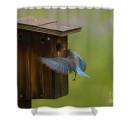 Feeding Time For Bluebirds Shower Curtain