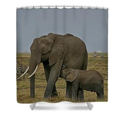 Feeding Time Shower Curtain by Gary Hall