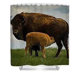 Shower Curtain featuring the photograph Feeding Time II by Gary Lengyel