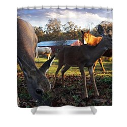 Feeling At Home Shower Curtain by Bill Stephens