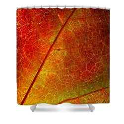 Feeling Fall Shower Curtain by Kathi Mirto