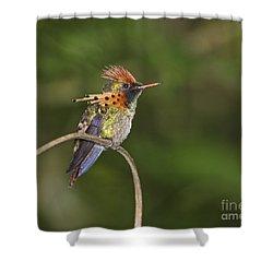 Feisty Little Fellow..  Shower Curtain