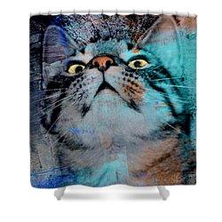 Feline Focus Shower Curtain by Kathy M Krause