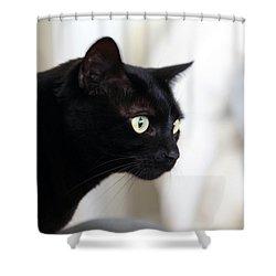 Feline On The Prowl Shower Curtain