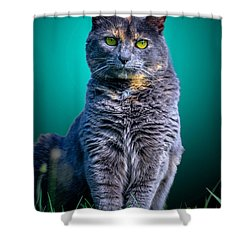 Feline Shine Shower Curtain