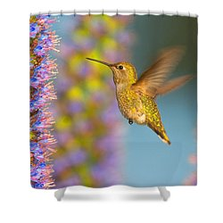 Female Anna's Hummingbird Huntington Beach California Shower Curtain
