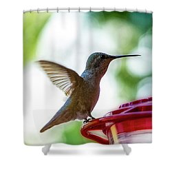 Shower Curtain featuring the photograph Female Anna's Hummingbird V24 by Mark Myhaver